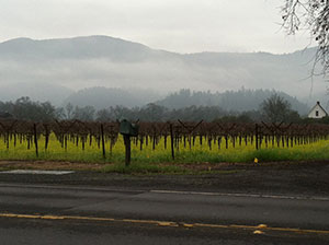 Napa Valley with fog over vineyard